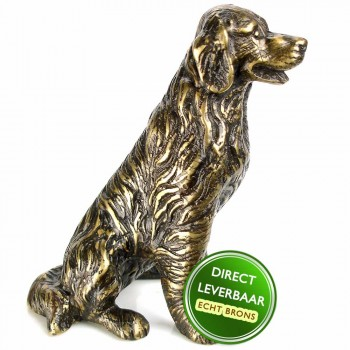 Hond retriever brons